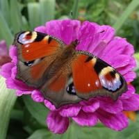 Z lekkością motyla pod kołderkę :))