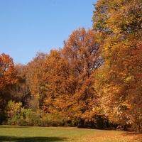 Złota Polska Jesień w parku w moim mieście