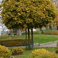 Zdjęcie drzewka z liśćmi