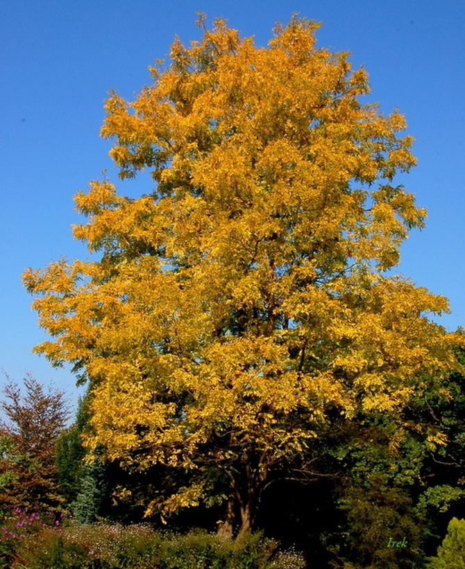 D - drzewo jesienne