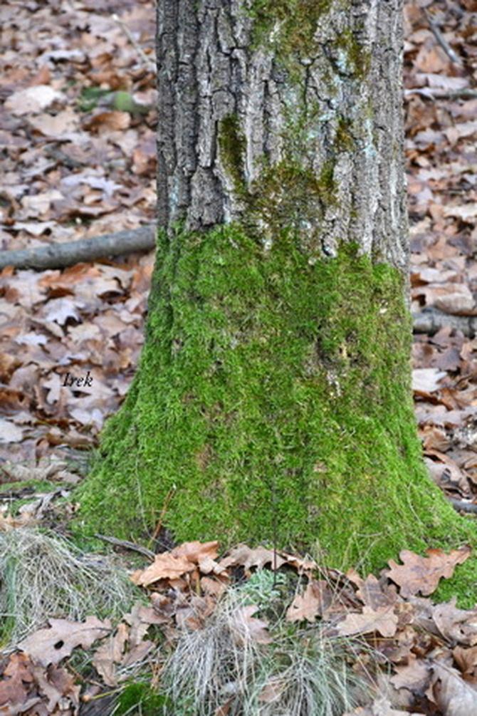 Drzewo w skarpetce