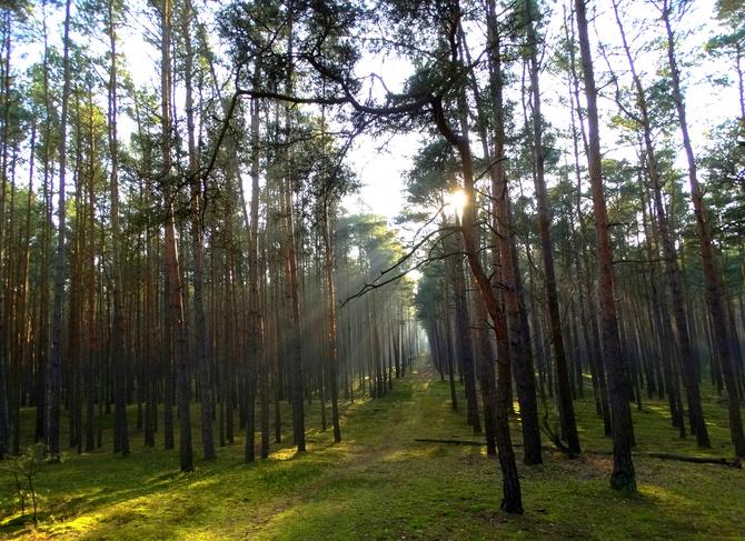 Dx2 Drzewa i dukt z dzisiejszego spacerku :)