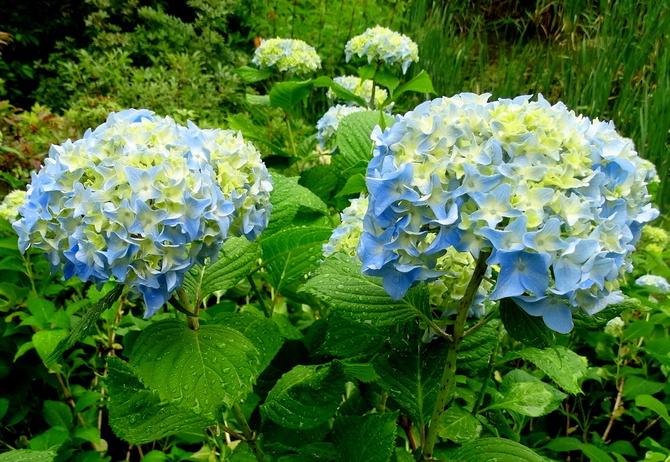 H- Błękitnych chmurek Wam życzę :)
