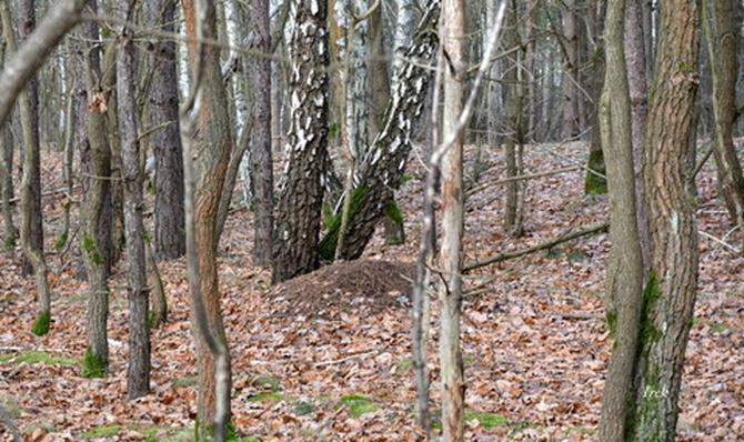 Inny las późną jesienią