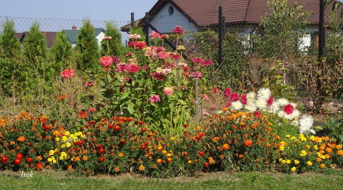 Kwiaty w ogrodzie u mojej córki