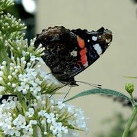 Gdy były motyle:)