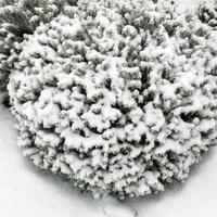 Hebe przysypane śniegiem