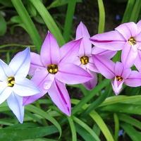 I, zakochałam się w tych kwiatkach