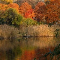 J - Jezioro w parku jesienią