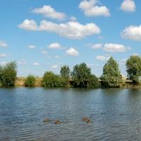 J - Jezioro z kaczkami latem