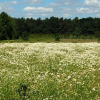 Ł - Łąka z kwiatami