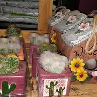 Kaktusy i domki....
