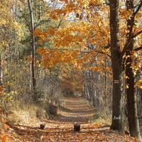 Las wczesną jesienią