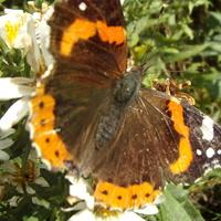 Potwierdzam kiedysiejsze motyle,