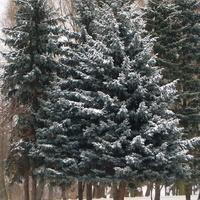 Zima 2010 r.