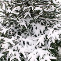 Zima 2010 rok