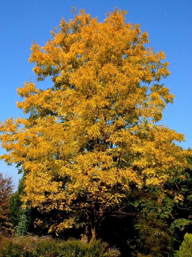 drzewo jesienne na tle błękitu