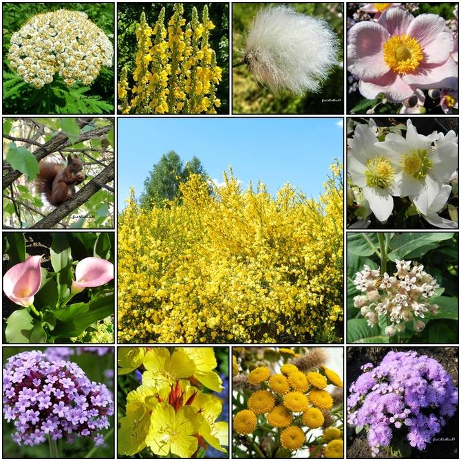 Kwiaty-od wiosny do jesieni