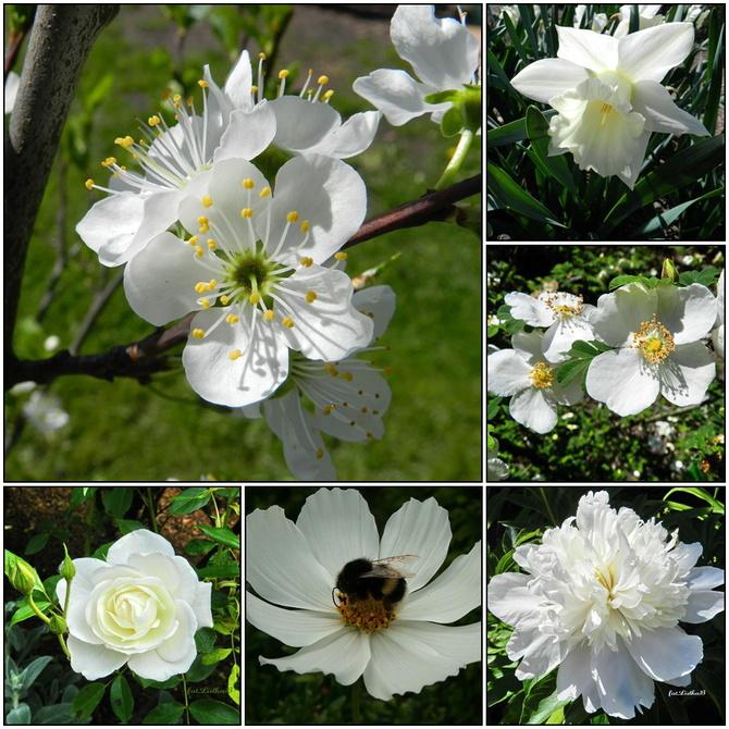 Kwiaty w kolorze białym