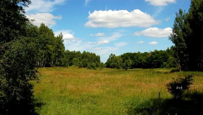 Niebo nad łąką