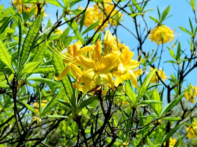 Żółty - radosny:)