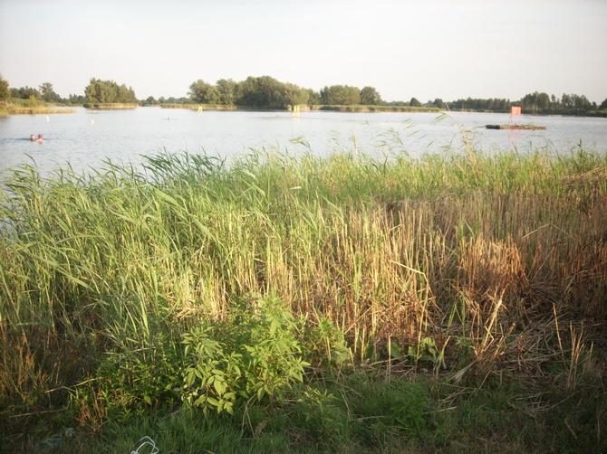 Upał,jezioro i trawy.....