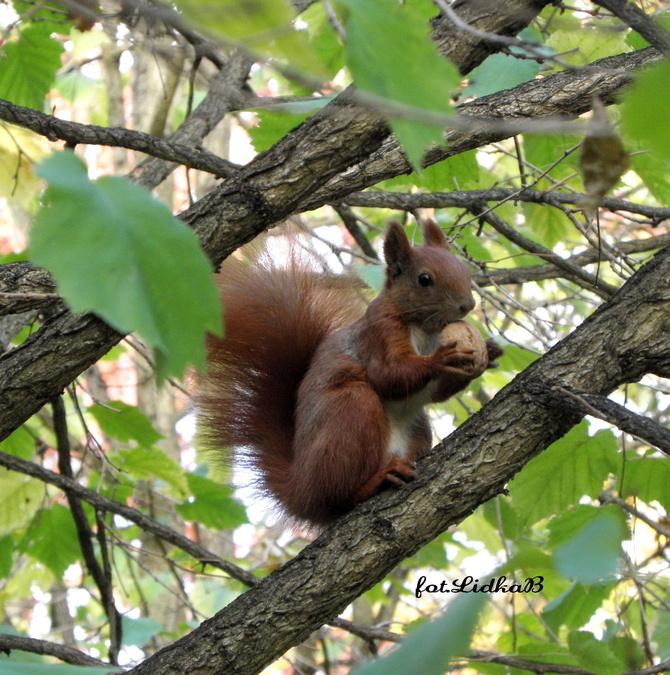 W-Wiewiórka