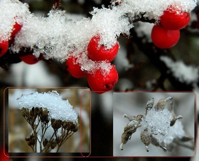 Zimowe owoce:)