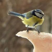 Aktualnie trwa ptasi nalot!