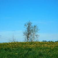 błękit wiosenny