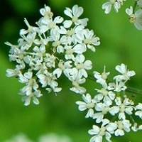 Białe wśród zieleni:)