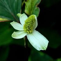 Biel z zielenią:)