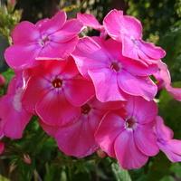 Dołączę z różowym kolorkiem :)