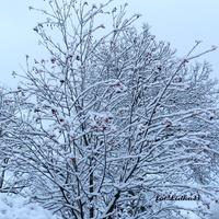 Drzewa otulone białym puchem