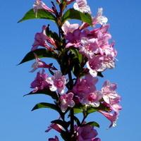 Kwitnąc gałązka na tle błękitnego nieba