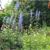 Lato w ogrodzie...
