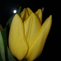 Niby żółty ale blady...
