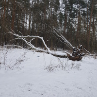 Śnieg stopniał....
