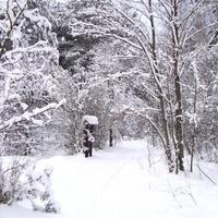 Śnieg w lesie