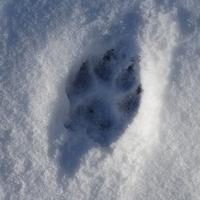 Śniegu tyle co kot  napłakał :)))