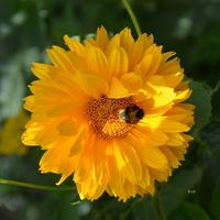 pomarańczowy kwiat z broszką
