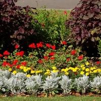 R - różne kwiaty na klombie