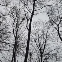 Smutne drzewa...