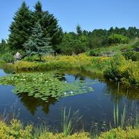 Staw z liliami wodnymi w ogrodzie botanicznym