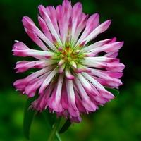 taki zwykły kwiatek