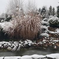 U-uśpiony ogród