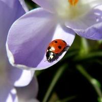 W wiosennym słoneczku:)