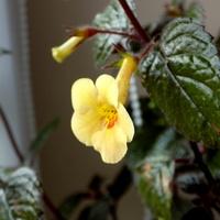 Yellow Quinn :)
