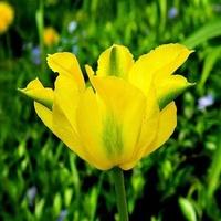 Zielono - żółty:)