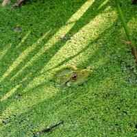 zielony kamuflaż ☺